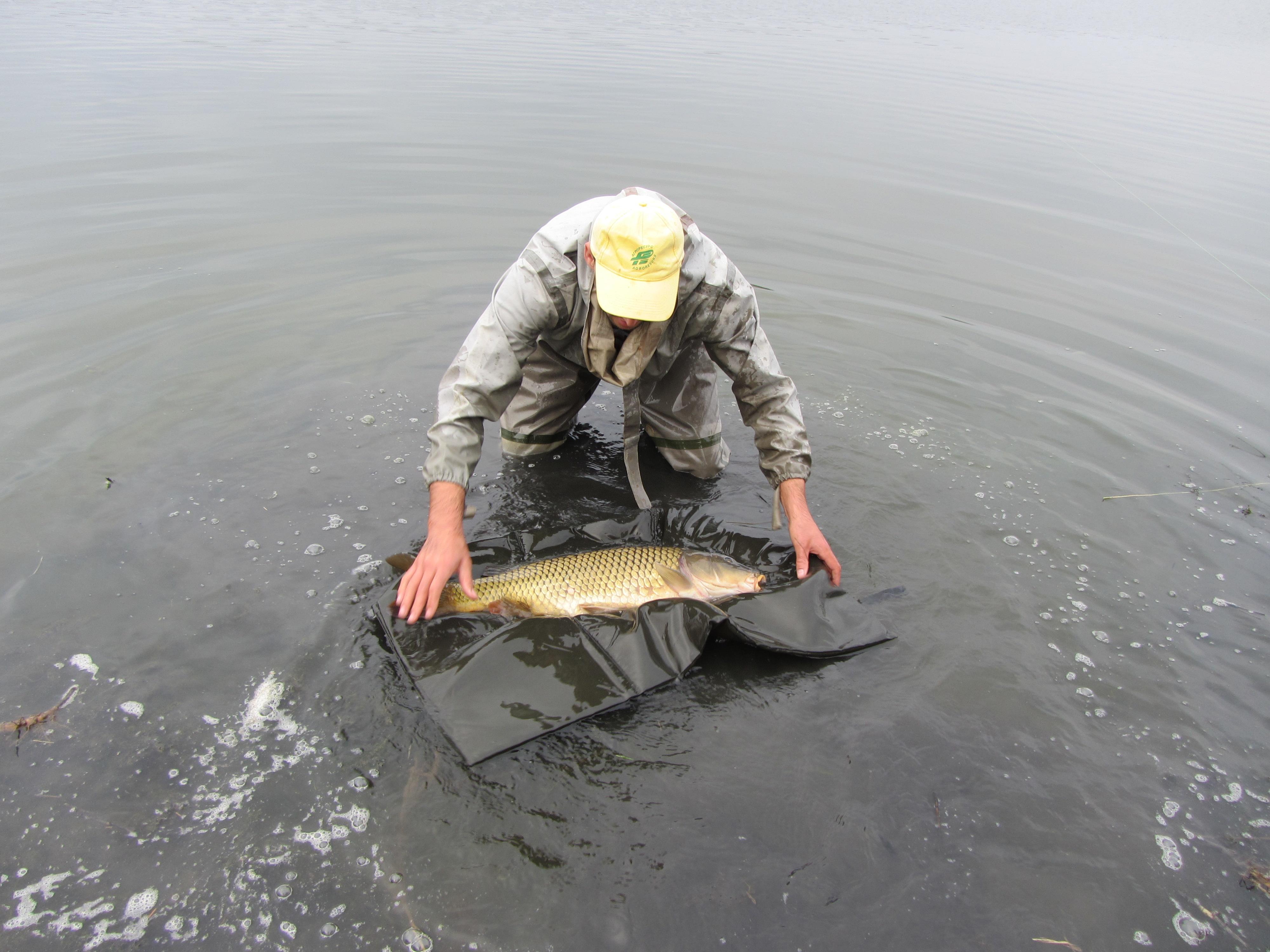 карповая рыбалка одесская