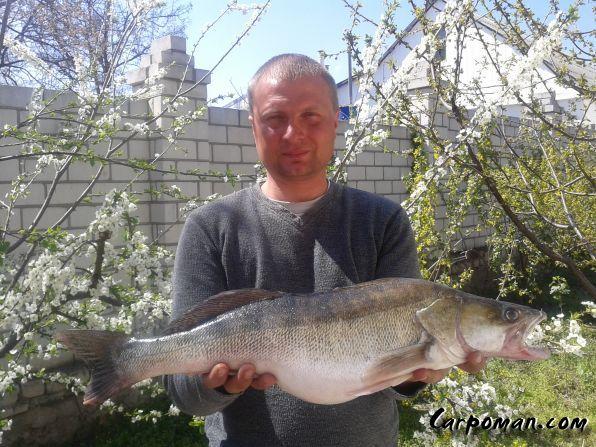 рыбалка в херсоне на сети