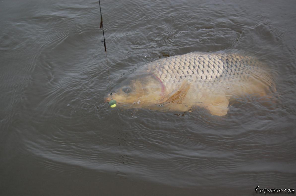 рыба орловской области фото заказать ступино, большой