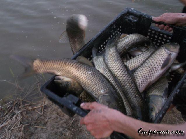 рыбалка визирка маленький ставок