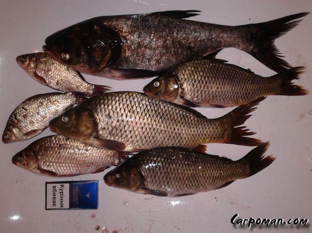 рыбалка в черноглазовке
