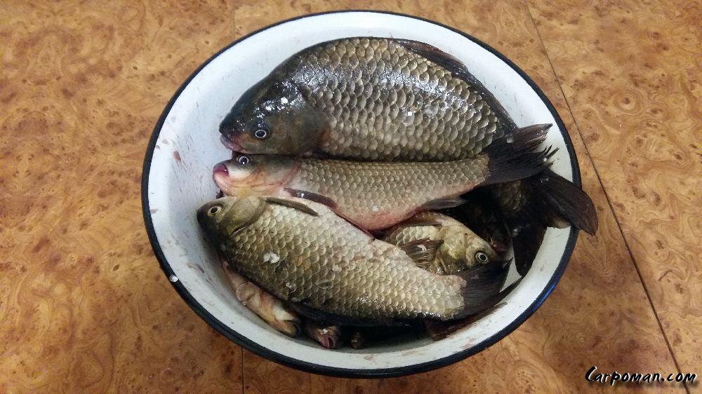 все о рыбалке на бугу