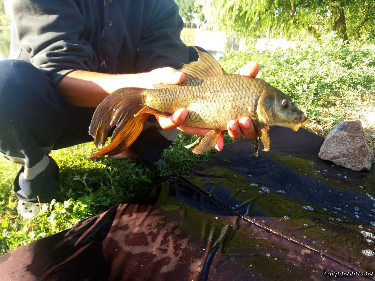 Карповая балка крым рыбалка